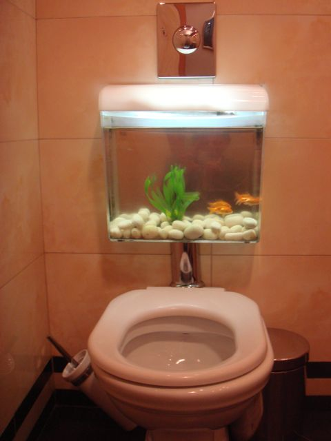 eli the bookish spy stationed next door fishes for tanks On toilet fish tank